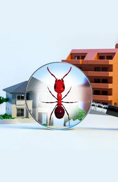 Le diagnostic termites
